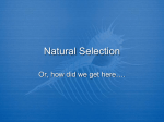 5_Week_of_February_6-11,_2012__files/Natural Selection PPT