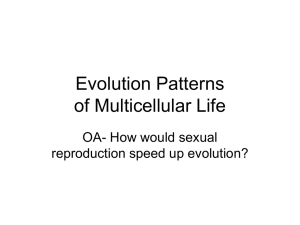 Evolution Patterns