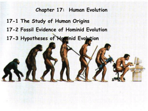 Chapter 17-Human Evolution