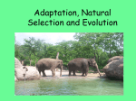 Adaptation, Natural Selection and Evolution