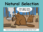 Natural selection and Selective Breeding PowerPoint