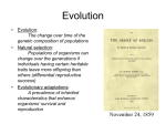 Evolution Notes