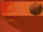 Evolution Review Powerpoint