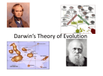Darwin`s Theory of Evolution