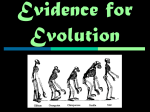 2/19/13 Evidence for Evolution