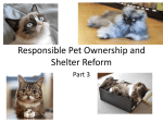 Responsible Pet Ownership and Shelter Reform Part 3