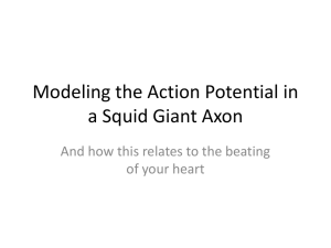 The Hodgkin-Huxley model (and other action potential models)