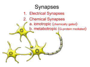 Synapses - Franklin College