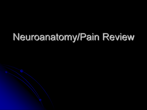 Neuroanatomy/Pain Review