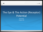 The Eye & The Action Potential