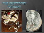 The gustatory pathway - West Virginia University