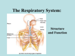 The Respiratory System: - Western Washington University
