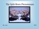 The Split-Brain Phenomenon