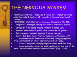 THE NERVOUS SYSTEM - Fox Valley Lutheran High School