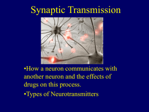 Synaptic Transmission - Grand Haven Area Public Schools