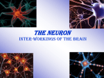 The Neuron - VirtualAvenue