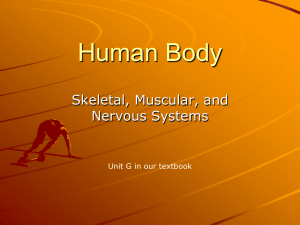 Human Body - morton709.org