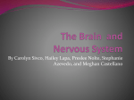 The Nervous System - Watchung Hills Regional High School