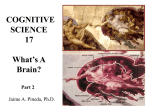 What's a Brain? Part 2 - UCSD Cognitive Science