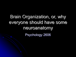 Brain Organization or, why everyone should have some