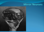 Mirror Neurons & You