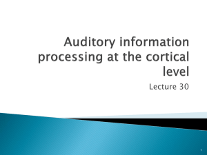 Auditory information processing at the cortical level