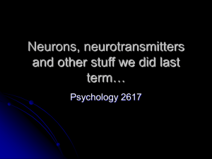 Neurons, neurotransmitters and other stuff we did last term…