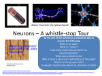 Neurons – A whistle-stop Tour