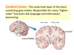 Interbrain and Brainstem