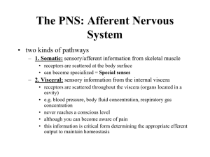 to find the lecture notes for lectures 9 the afferent division of the PNS