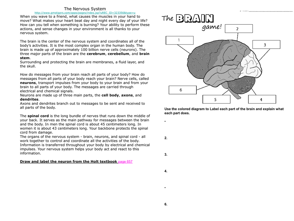 Label Parts Of The Brain Game - Pensandpieces