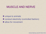 Muscle and Nerve Tissue