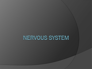 Nervous System - Cloudfront.net