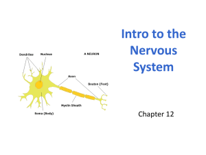 1. Intro to Nervous System WEB