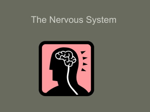 The Nervous Systeminofnotes