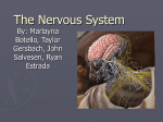 The Nervous System - Kirchner-WHS