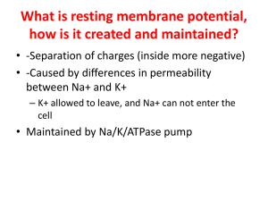 What is resting membrane potential, how is it created and maintained?