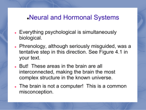 Module 4 Neural and Hormonal Systems