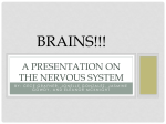BRAINS!!! A Presentation on the Nervous System