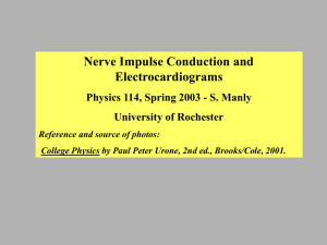 Part 1 (nerve impulses, ppt file)