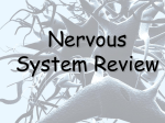 Nervous System Review Power Point