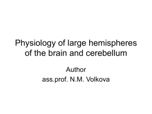 1.3 Physiology large hemispheres cerebellum