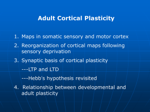 Adult Cortical Plasticity