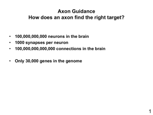 How does an axon know where to go?