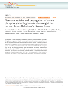 Neuronal uptake and propagation of a rare phosphorylated high-molecular-weight tau