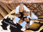 Integumentary - Davis School District