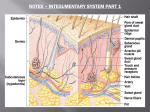 Integumentary System Notes Part 1