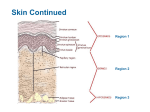 Notes on Integumentary System (Dermis)