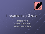 Integumentary system introduction PP