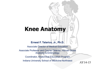 Knee Anatomy - Indiana University